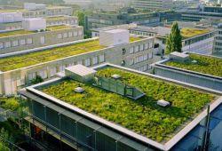 «Πράσινες» στέγες σε 13 σχολεία της Αθήνας